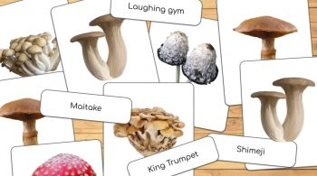 Mushroom themed Montessori Style 3 Part Cards